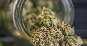 California Marijuana Dispensary Laws