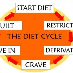 perfect diet cycle plan 1